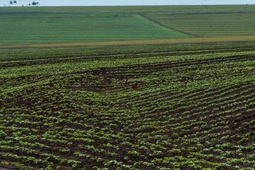 Brazil to lead world in biotech crops: association