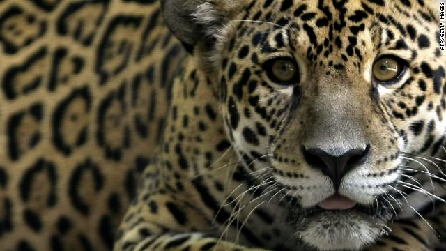 amazon rainforest animals. brazil amazon rainforest portal animals f